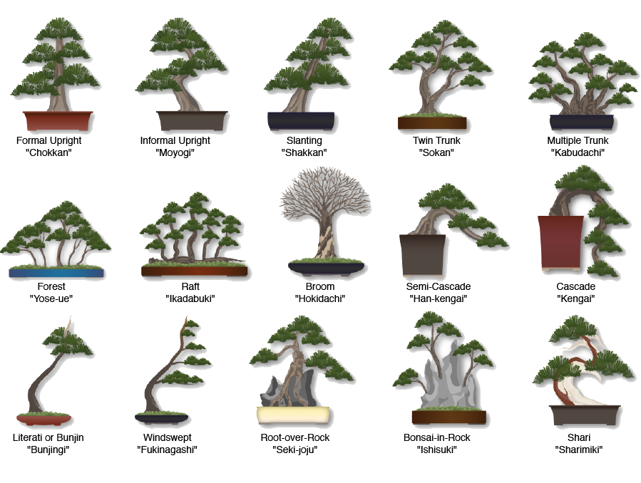Image showing different styles of bonsai