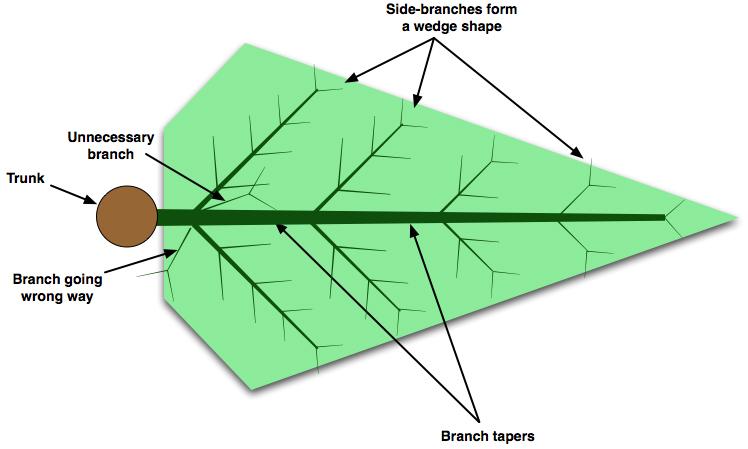 Preferred branch shape - arrowhead shape