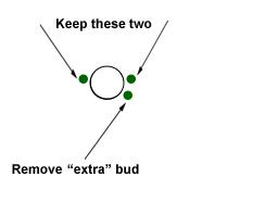 "Remove ""extra"" bud"