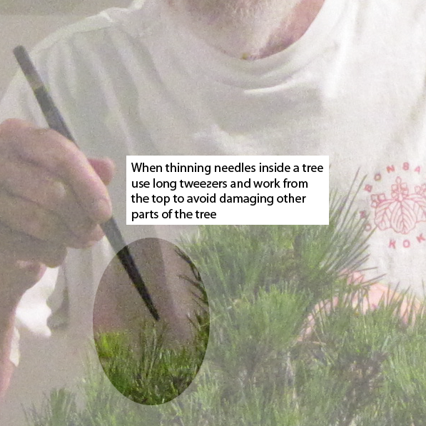 Removing needles inside the tree