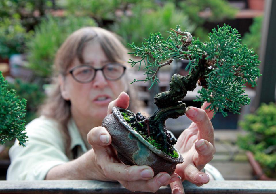 Kathy Shaner holding a shohin Shimpaku Juniper