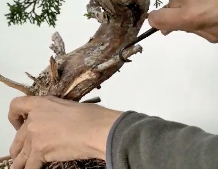 Using a draw knife to reduce the diameter of the branch